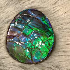 アンモライト かけら 欠片 M 標本にどうぞ パワーストーン お守り 天然石 化石 ammolite-museum