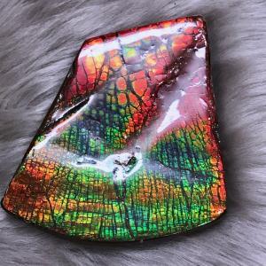 アンモライト かけら 欠片 L 標本にどうぞ パワーストーン お守り 天然石 化石 L1801|ammolite-museum