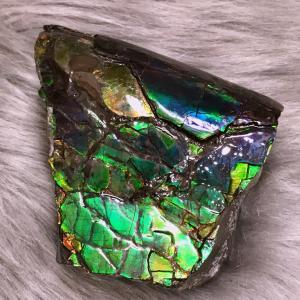 アンモライト かけら 欠片 L 標本にどうぞ パワーストーン お守り 天然石 化石 L1802|ammolite-museum