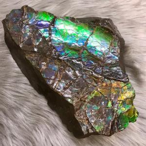 アンモライト かけら 欠片 LL 標本にどうぞ パワーストーン お守り 天然石 化石 LL1801|ammolite-museum