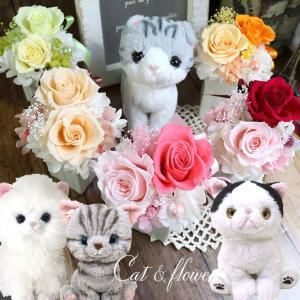 誕生日プレゼント 猫 花 誕生日  ギフト  猫 ぬいぐるみ  プリザーブドフラワー アメリカンショートヘア ペルシャ ラグドール 結婚記念日 猫と花のセット|ampoule-shop
