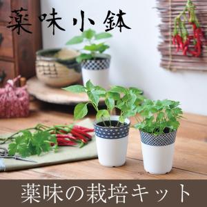 栽培キット 栽培セット 薬味 種 三つ葉 しそ 種 とうがらしの種 ヤクミ 家庭菜園 キッチン 栽培 紫蘇 唐辛子 とうがらし シソ|ampoule-shop