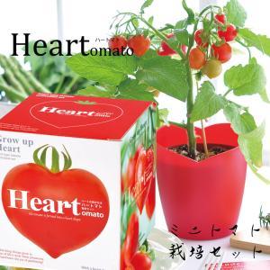 【マイクロトマト 栽培キット】マイクロトマト 種 栽培キット 栽培セット 家庭菜園 キッチン 栽培 母の日プレゼント  誕生日 プレゼント 贈り物|ampoule-shop