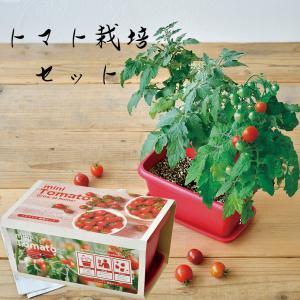【 ミニトマト 栽培キット プランダー 】トマト 種 栽培キット 栽培セット 家庭菜園 キッチン 栽培 母の日プレゼント  誕生日 プレゼント 贈り物 2021|ampoule-shop