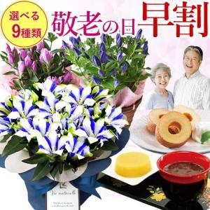 遅れてごめんね!敬老の日 2019 鉢花 希少価値の高いりんどう 白寿 りんどう スイーツセット 鉢花とスイーツセット お菓子 送料無料|anne
