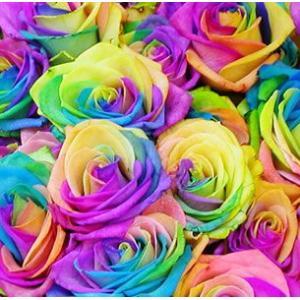 当店にはパートナーをアッと驚かせる花束があるんです。魔法をかけられたローズは見事なカラフルさに変身。...