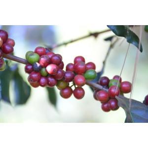 厳選ストレートコーヒー豆「ブラジル プラナウト ナチュラル」(フレンチロースト・200g)/自家焙煎スペシャルティコーヒー珈琲豆|anokoro