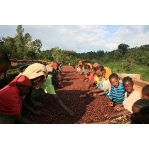 厳選ストレートコーヒー豆「エチオピア イルガチェフェ・ウォテ」(ミディアムロースト・200g)/自家焙煎スペシャルティコーヒー珈琲豆|anokoro