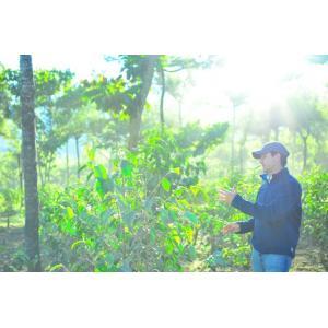 厳選ストレートコーヒー豆「グァテマラ サンマルティン・ラ・メルセー」(シティロースト・200g)/自家焙煎スペシャルティコーヒー珈琲豆|anokoro