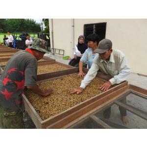 厳選ストレートコーヒー豆「インドネシア・スマトラ島 LCFマンデリン」(フレンチロースト・200g)/自家焙煎スペシャルティコーヒー珈琲豆|anokoro