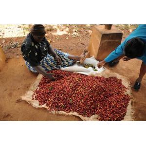 厳選ストレートコーヒー豆「ケニア キウニュ AB」(シティロースト・200g)/自家焙煎スペシャルティコーヒー珈琲豆|anokoro