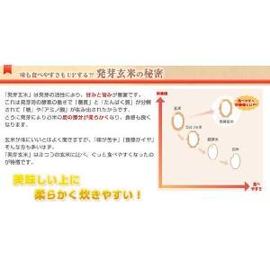 コジマ 有機活性発芽玄米2kg x2 袋発芽玄米【あすつく対応】【送料無料】 anshinsyokuhinkan 03