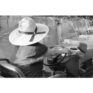 幸水 梨 4L 11個〜12個入り 千葉県市川産市川の梨 産地直送梨伝統の味 お彼岸贈り物 お中元暑中見舞い|antbeeshop|09