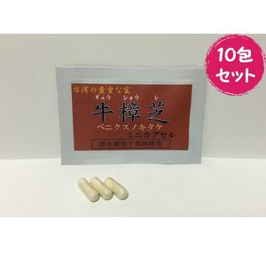 健康食品サプリメント 牛樟芝ミニカプセル 10包セット ベニクスノキタケ・紅樟芝|antrodia-cinnamomea