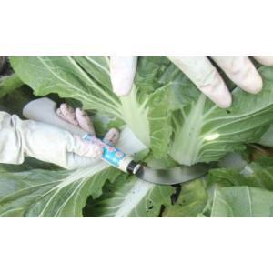 野菜切り鎌(大)「kama-yasai-04」白菜 ズイキ切り 刃巾:30mm 刃渡り:118mm 重さ:110g|anyoujiya-1