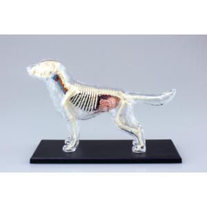 犬 解剖スケルトンモデル 4D VISION 動物解剖モデル No.12 #立体パズル|aoshima-bk