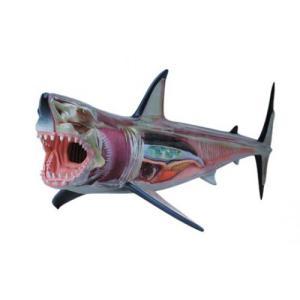 ホホジロ鮫 解剖モデル 4D VISION 動物解剖モデル No.02 #立体パズル|aoshima-bk