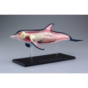 イルカ 解剖モデル 4D VISION 動物解剖モデル No.07 #立体パズル|aoshima-bk