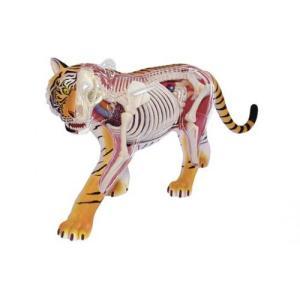 虎 解剖モデル 4D VISION 動物解剖モデル No.21 #立体パズル|aoshima-bk