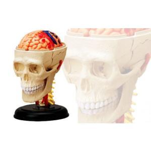 頭 解剖モデル 4D VISION 人体解剖モデル No.4 #立体パズル|aoshima-bk