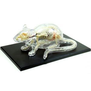 ネズミ 解剖スケルトンモデル 4D VISION 動物解剖モデル No.14 #立体パズル|aoshima-bk
