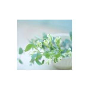MINI純正 アロマ・ディフューザー本体 5種(フレッシュ・シトラス/レモン・ユーカリ/オレンジ・グレープフルーツ/コンフォート・リラックス/フレッシュ・ミント)|apdirect|02