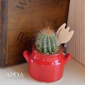 サボテン 植え込み 多肉植物 ミルクタンク風 鉢入り 陶器 ピック付き プレゼント ギフト|apoa