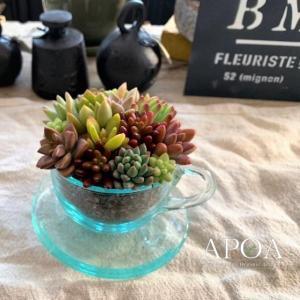 母の日 プレゼント 鉢花 カップ&ソーサー大 ギフト ガラス 多肉植物 寄せ植え|apoa