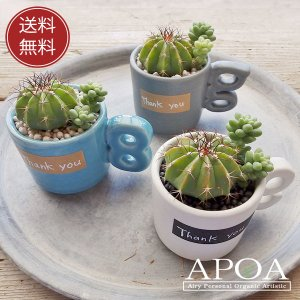 サボテン 多肉植物 寄せ植え デミスタカップ アルファベット 鉢入り 陶器 プレゼント ギフト|apoa
