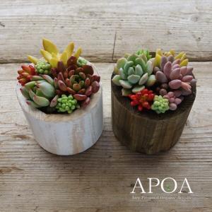 プレゼント 鉢花 多肉植物 おしゃれな 寄せ植え ウッドコンポート 母の日 父の日|apoa