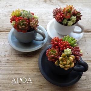 多肉植物 寄せ植え カップ&ソーサー 陶器 北欧カラー プレゼント|apoa