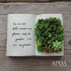 多肉植物 寄せ植え BOOK型 Sサイズ プレゼント 鉢花 本と多肉|apoa