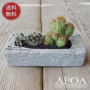 サボテン 多肉植物 寄せ植え ジオラマ ゾウ ミニアニマル プレゼント|apoa