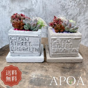 yahoo限定 プレゼント 多肉植物 寄せ植え セメント鉢 おしゃれ ギフト ラッピング 母の日 父の日|apoa