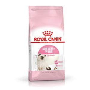 ロイヤルカナン キトン 成長後期の子猫専用 2kg|aquabase