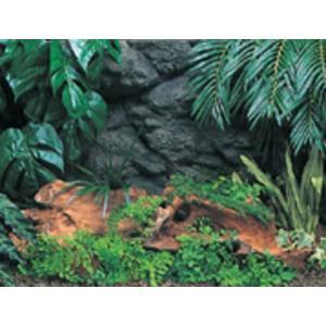 コトブキ バックスクリーン 密林の神秘 アマゾン 600 aquabase