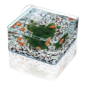 水作 グラスガーデンF300 金魚・メダカ飼育セット