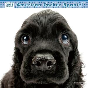 2018年度版 THE DOG カレンダー アメリカン・コッカー・スパニエル|aquabase