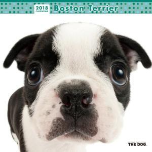 2018年度版 THE DOG カレンダー ボストン・テリア|aquabase