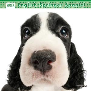 2018年度版 THE DOG カレンダー イングリッシュ・スプリンガー・スパニエル|aquabase