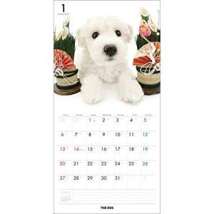 2019年度版 THE DOG カレンダー ビション・フリーゼ|aquabase|02