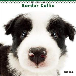 2019年度版 THE DOG カレンダー ボーダー・コリー|aquabase