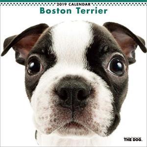 2019年度版 THE DOG カレンダー ボストン・テリア|aquabase