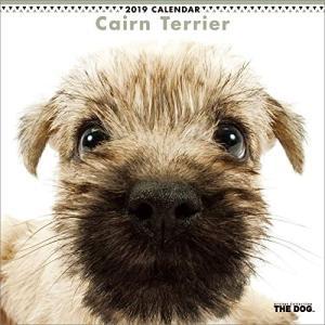 2019年度版 THE DOG カレンダー ケアーン・テリア|aquabase