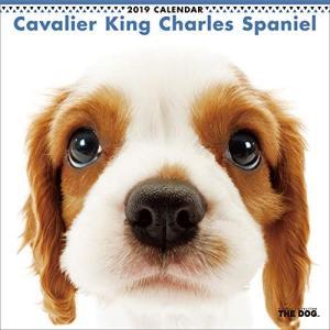 2019年度版 THE DOG カレンダー キャバリア・キング・チャールズ・スパニエル|aquabase