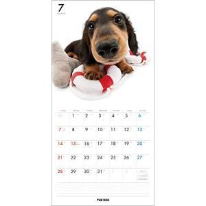 2019年度版 THE DOG カレンダー ダックスフンド|aquabase|03