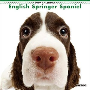 2019年度版 THE DOG カレンダー イングリッシュ・スプリンガー・スパニエル|aquabase