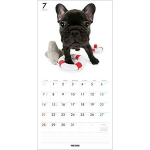 2019年度版 THE DOG カレンダー フレンチ・ブルドッグ|aquabase|03