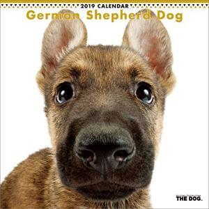 2019年度版 THE DOG カレンダー ジャーマン・シェパード・ドッグ|aquabase