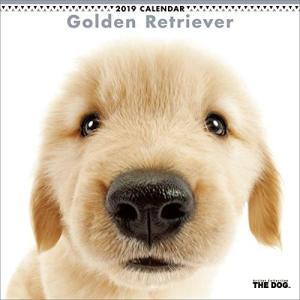 2019年度版 THE DOG カレンダー ゴールデン・レトリーバー|aquabase